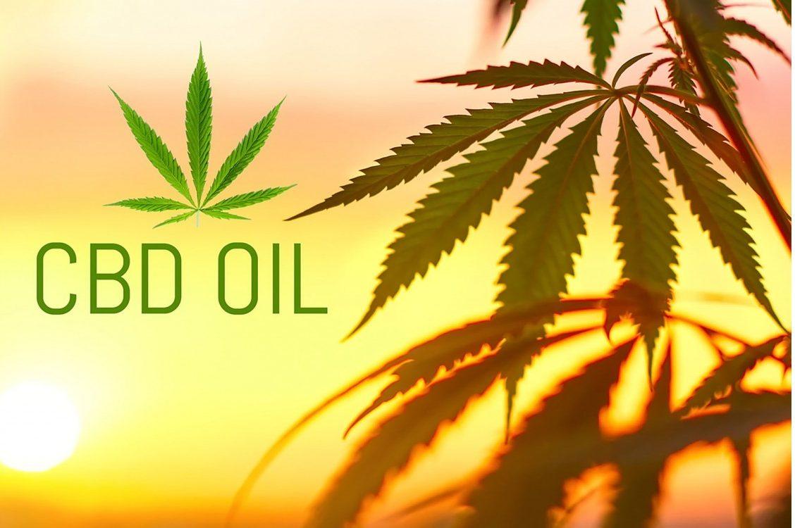 Marijuana leaves against sunset