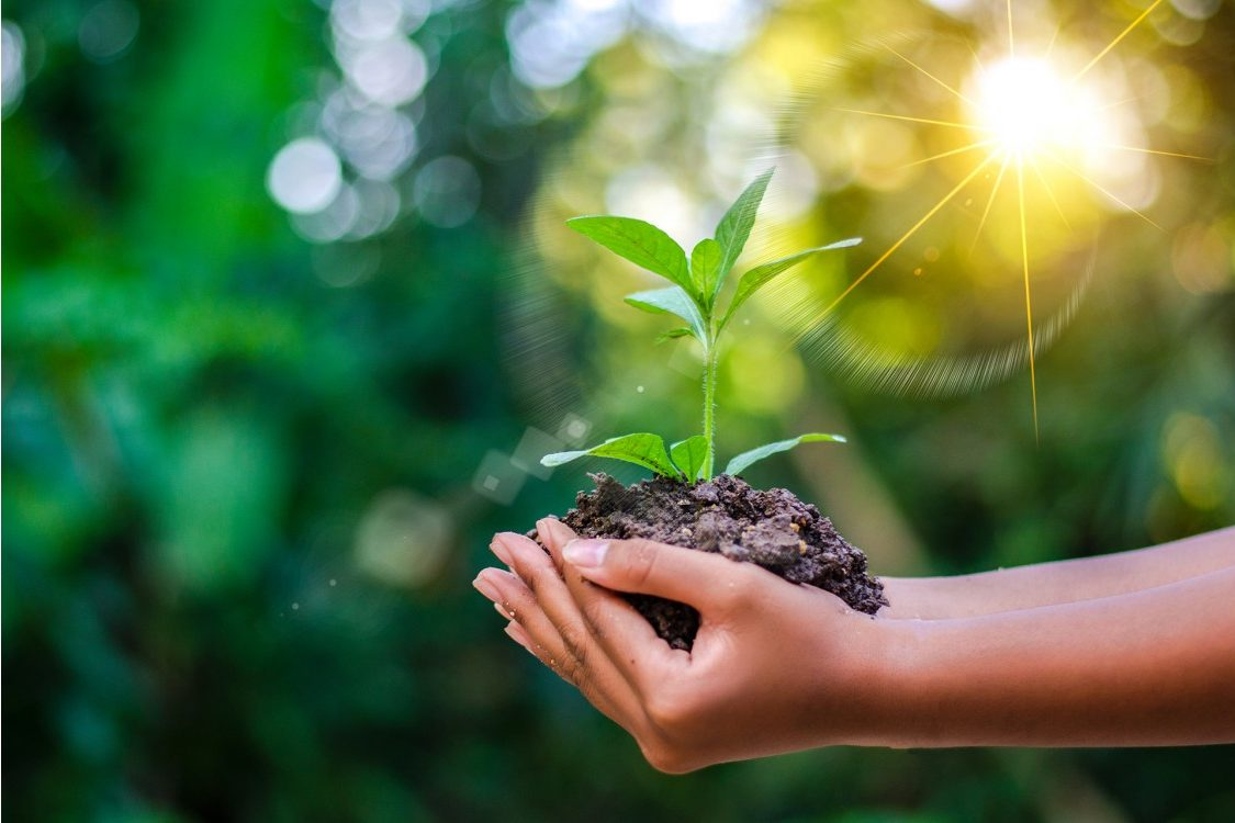 Woman holding plant and soil